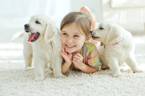Getting Rid of the Stink from Pets at Home